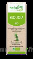 Herbalgem Séquoia Macérat bio 30ml à Courbevoie
