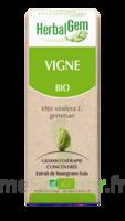 Herbalgem Vigne Macérat bio 30ml à Courbevoie